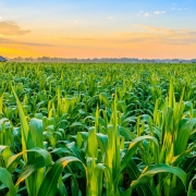 drones-dans-agriculture-latitude-gps