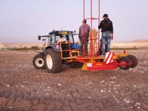 Plantation d'Oliviers au Maroc
